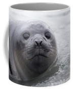 Elephant Seal Pup Coffee Mug