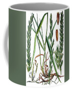 Elymus Repens, Commonly Known As Couch Grass Coffee Mug