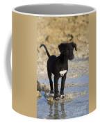 Fishing Puppy Of Polynesia Coffee Mug