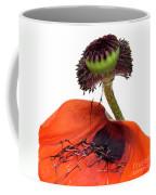 Flower Poppy In Studio Coffee Mug