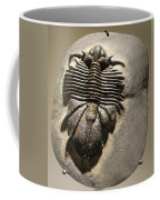Fossil Coffee Mug