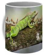 Green Iguana Iguana Iguana, Tarcoles Coffee Mug