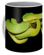 Guatemala Palm Pitviper Coffee Mug