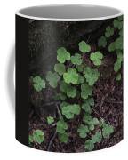 Hoh Rain Forest 3393 Coffee Mug