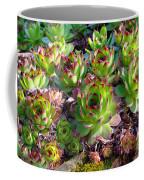 Houseleeks Coffee Mug