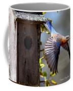 Img_1414-003 - Eastern Bluebird Coffee Mug