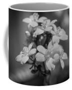 Jatropha Blossoms Painted Bw Coffee Mug