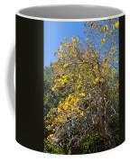 Jerusalem Thorn Tree Coffee Mug