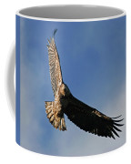 Juvenile Bald Eagle Coffee Mug