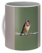 Juvenile Barn Swallow Coffee Mug