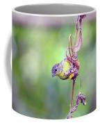 Lesser Goldfinch 4052 Coffee Mug
