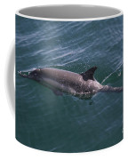 Long-beaked Common Dolphins In Monterey Bay 2015 Coffee Mug