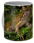 Mehu�n Green Frog Coffee Mug