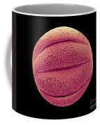 Monarda Didyma Pollen Grains, Sem Coffee Mug
