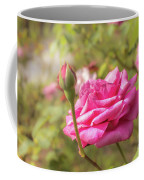 Moondrops 85 Hybrid Tea Rose, Pink Rose Originally Produced By  Coffee Mug