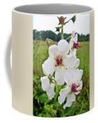 Moth Mullein Wildflowers - Verbascum Blattaria Coffee Mug