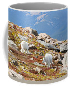 Mountain Goats On Mount Bierstadt In The Arapahoe National Forest Coffee Mug
