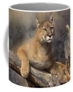 Mountain Lion Felis Concolor Coffee Mug