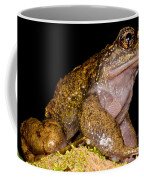 Noras Spiny Chest Frog Coffee Mug