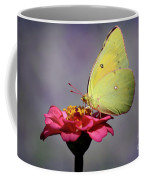 Orange Sulphur Butterfly Portrait Coffee Mug