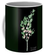 Pacific Mistletoe, Phoradendron Coffee Mug