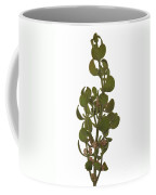 Pacific Mistletoe Coffee Mug