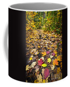 Path In Fall Forest Coffee Mug by Elena Elisseeva