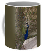 Peacock Close-up Coffee Mug