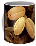 Pear Pollen Grains, Sem Coffee Mug