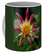 Peppermint Sunburst Coffee Mug