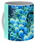 Peronospora Parasitica Coffee Mug by Biophoto Associates and Photo Researchers