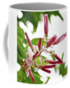 Pink Tropical Flower In Huntington Botanical Garden In San Marino-california Coffee Mug