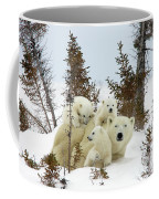 Polar Bear Ursus Maritimus Trio Coffee Mug