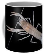Prickly Cave Crayfish Coffee Mug
