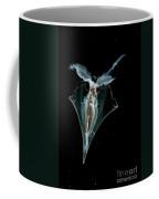 Pteropod Coffee Mug