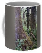 Quinault Rain Forest 3152 Coffee Mug