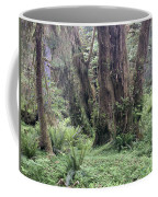 Quinault Rain Forest 3156 Coffee Mug