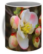 Quince Toyo-nishiki Coffee Mug