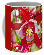 Red And White Columbine At Pilgrim Place In Claremont-california  Coffee Mug