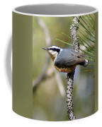 Red Breasted Nuthatch Coffee Mug