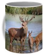 Red Deer In Bushy Park London Coffee Mug