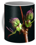 Red Elderberry Flower Buds Coffee Mug