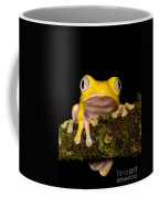Red-eyed Treefrog, Xanthic Form Coffee Mug