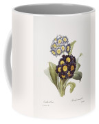 Redoute: Auricula, 1833 Coffee Mug by Granger