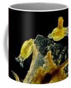 Rotifers Philodina Sp., Lm Coffee Mug