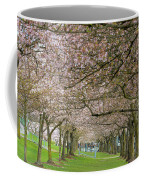 Rows Of Cherry Blossom Trees In Spring Coffee Mug