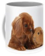 Ruby Cavalier King Charles Spaniel Pup Coffee Mug by Mark Taylor