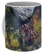 Seaweed Growing In A Rockpool On The Shore Roundstone County Galway Ireland Coffee Mug