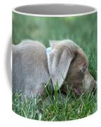 Silver Labrador Retriever Puppy  Coffee Mug