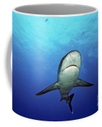 Silvertip Shark Coffee Mug